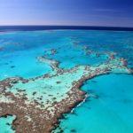 Découverte des coraux de Floride